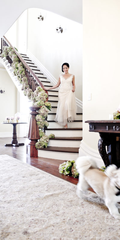 bride walking down the stairs with a dog