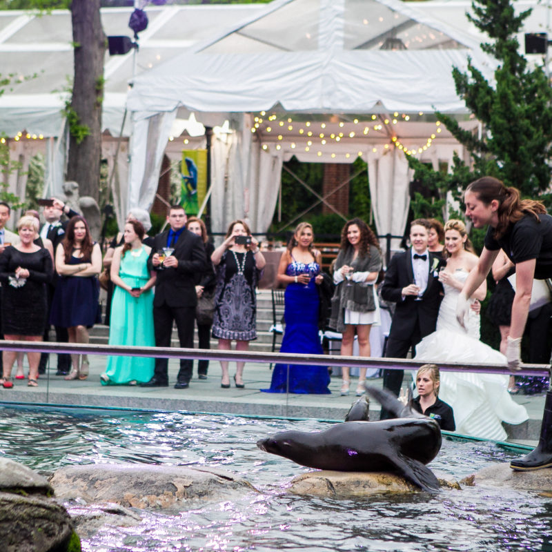 audience watching a trainer with a seal